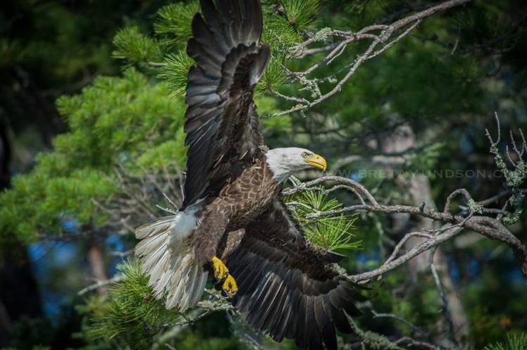 eagle land